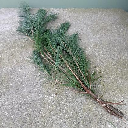 Seidenkiefer Bundware Länge ca. 80cm