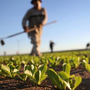 Otvoren Javni poziv za podršku poljoprivrednicima u TK