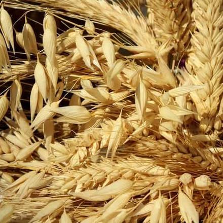 Rusija: Izvoz poljoprivrednih proizvoda u 2020. godini veći za 20 posto