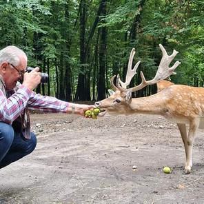 Jedino uzgajalište jelena u BiH: Htjeli da ih love, a danas ih uzgajaju i privlače brojne posjetioce