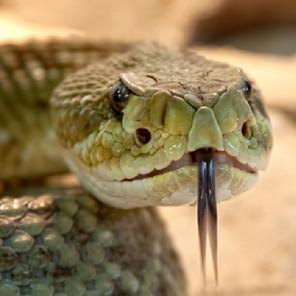 U BiH nema seruma protiv ugriza zmije