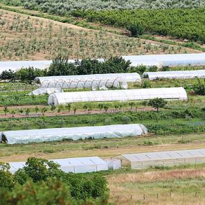 Za investicije u bh. poljoprivrednom sektoru EU osigurala tri miliona KM
