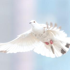 Grußwort zum Internationalen Kobane-Tag am 01.11.2019