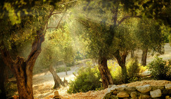 Tunisian Olive Wood Craft