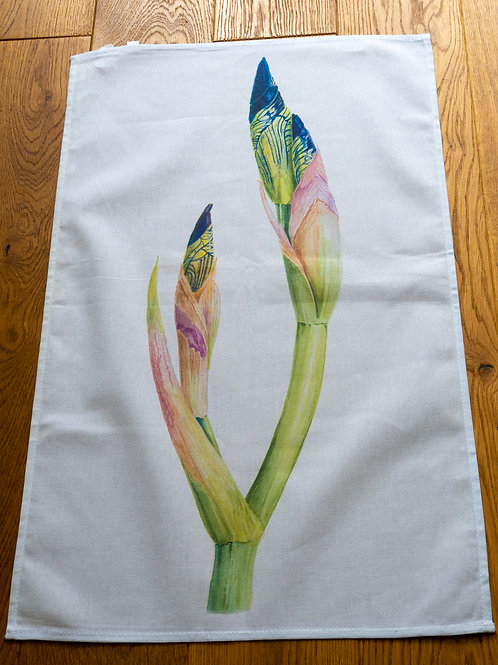 Tea Towel - Long Bud Iris by Sue Edwards