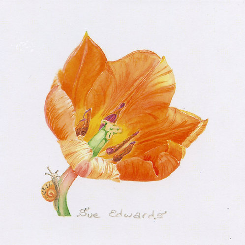 Sue Edwards Botanical Art Card
