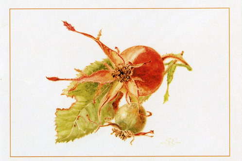 Sue Edwards Botanical Art Card