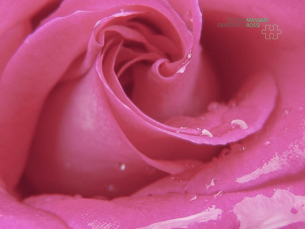 rosa tono umore.jpg
