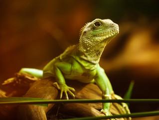 Listen to Your Lizard Brain