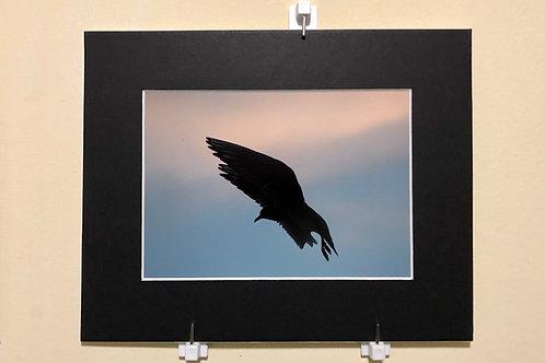 Wings In Flight  Southlake Woodley