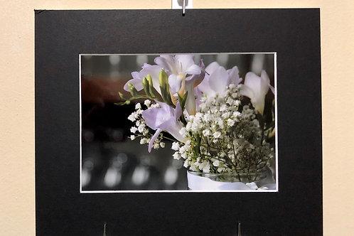 Freesia Bloom
