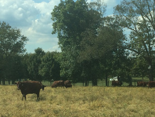 Brookview Beef Farms
