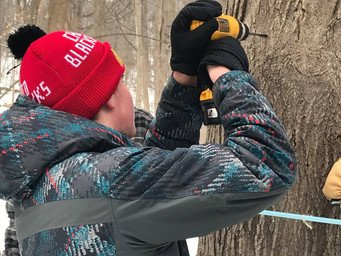 Sugar Maple Tapping Scheduled for Bendix Woods