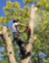 woodchuck-053_edited.jpg