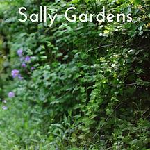 Sally Gardens FREE Harp Sheet Music
