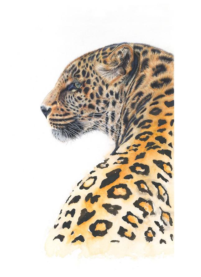 Leopard%20looking%20left_edited.jpg