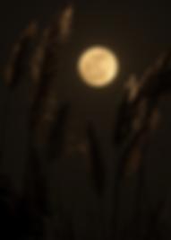 alexis-antonio-TFth26tEjss-unsplash_edit
