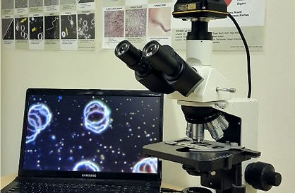 Live Blood Analysis is a live imagining assessment tool where a single drop of blood from an individual's fingertip is placed onto a slide. From there its viewed under a high powered darkfield microscope at a magnification of over 1000 times. The image is displayed on a television monitor and is visible to both the practitioner and client, allowing them to physically see how the blood is behaving within their body and what might possibly be having a negative impact on their health.