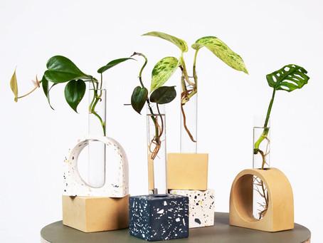Online Stores That Deliver Eco-Friendly Houseplants to Your Door