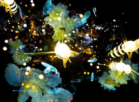 Light Painting: abeilles, pétales et fleurs