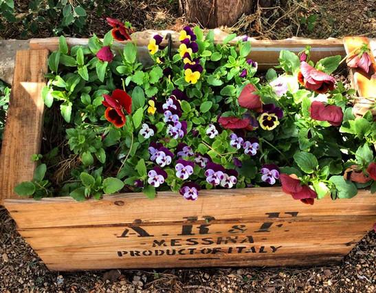kadita_garden_flowers.jpg