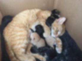 Mama Kittens.jpg