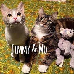 Jimmy & Mo (Bonded Pair)