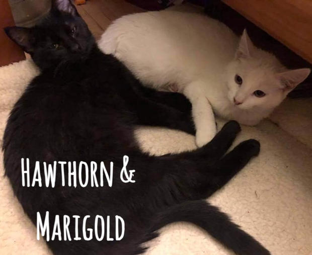 Hawthorn & Marigold (Bonded Pair)