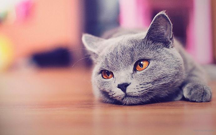 bsh cat.jpg