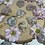 Thumbnail: Flower Agate Turtles