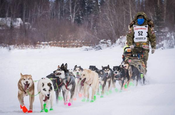 Battle Dawgs Alaska Iditarod Camp