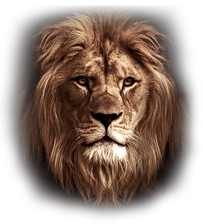 1-lion-fade-edge.png