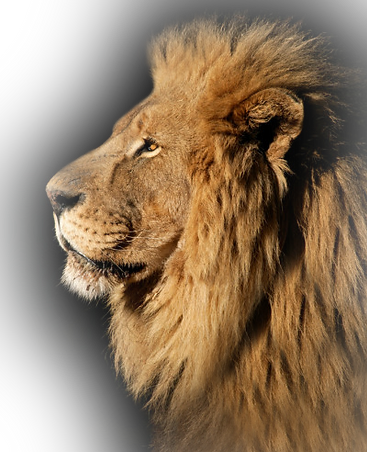 perfect-right-lion-fade.png