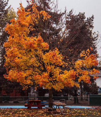 Fall in burnaby.