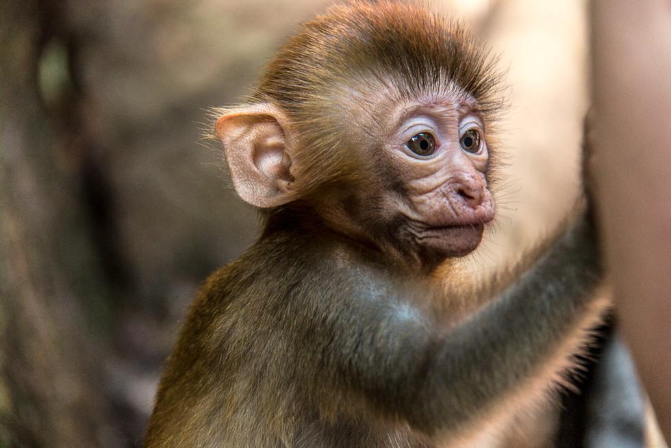 Little monkey.