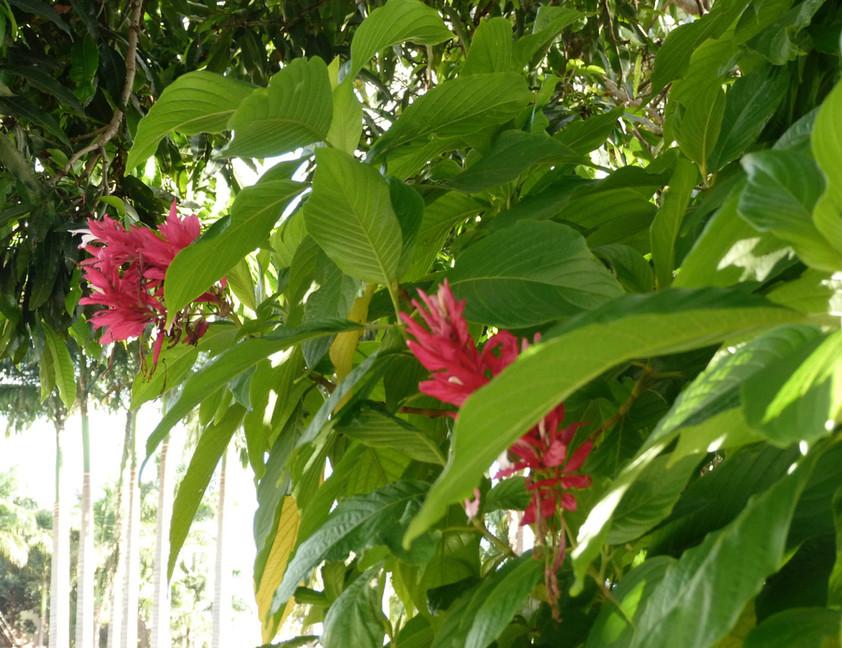 flore locale