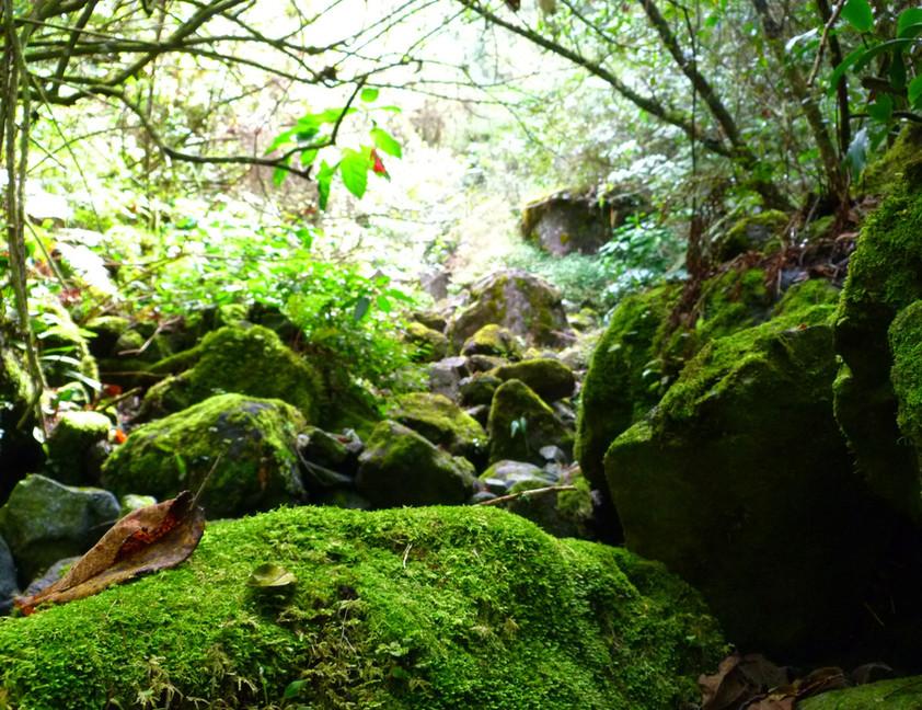 forêt primaire de Bébour