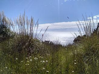 wild grass ocean.jpg