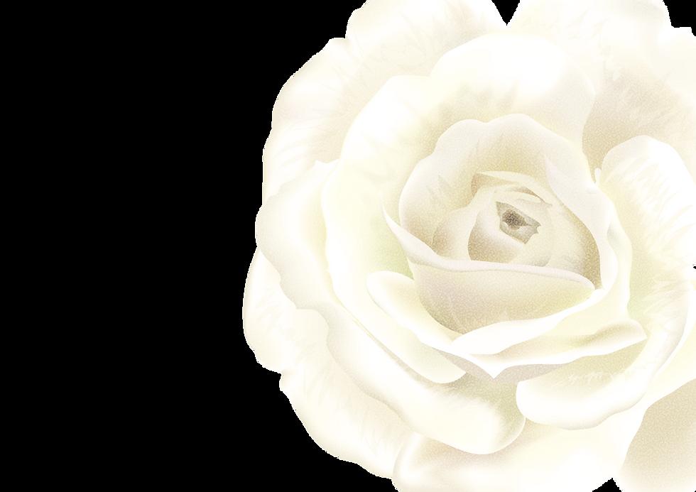 バラ背景画像png.png