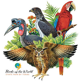 Bird of the World Show Illustration | State Fair of Texas