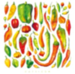 Chile Pepper Illustration | Albuquerque