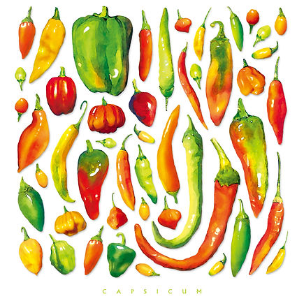 Chile Pepper Illustration | Albuquerque