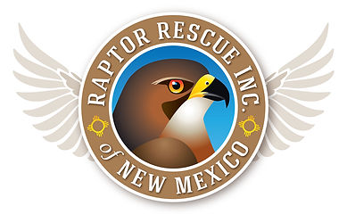 Raptor Rescue Logo Design | Albuquerque