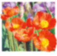 Iceland Poppies Illustration | Talk Back Tees | Oregon