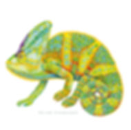 Chameleon Illustration | Talk Back Tees | Oregon
