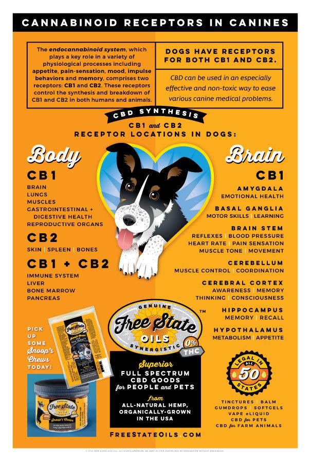 CBD Receptors in Dogs Poster