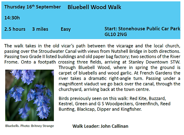 Bluebell woods.png