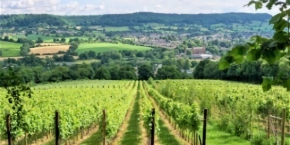 Festival Launch - vineyards, railway, canal & Cotswold Way