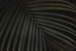 leaf-carved-plant-green.jpg