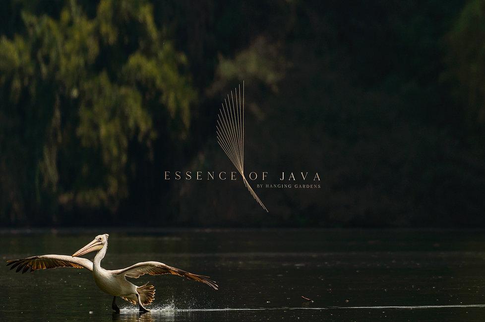 Essence of Java Logo br.jpg